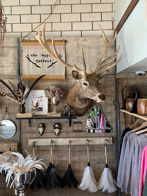 Taxidermy - Huge Red Stag
