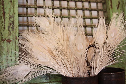 peacock feathers - bleached