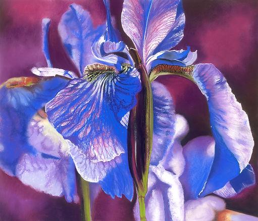 Irises .jpg