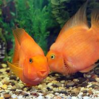 Goldie & Patrick