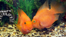 Your goldfish is more likely to remember your password than you are….