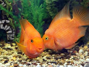 Happy Birthday, Pisces!