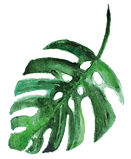 Palmenblatt rund.png