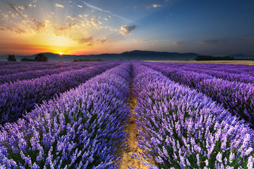 Provence Alpes Cote d'Azur