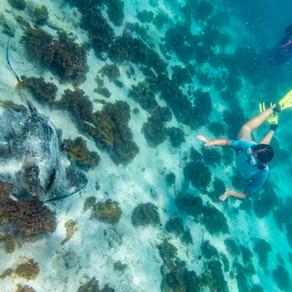 Webinar eilanden van Guadeloupe