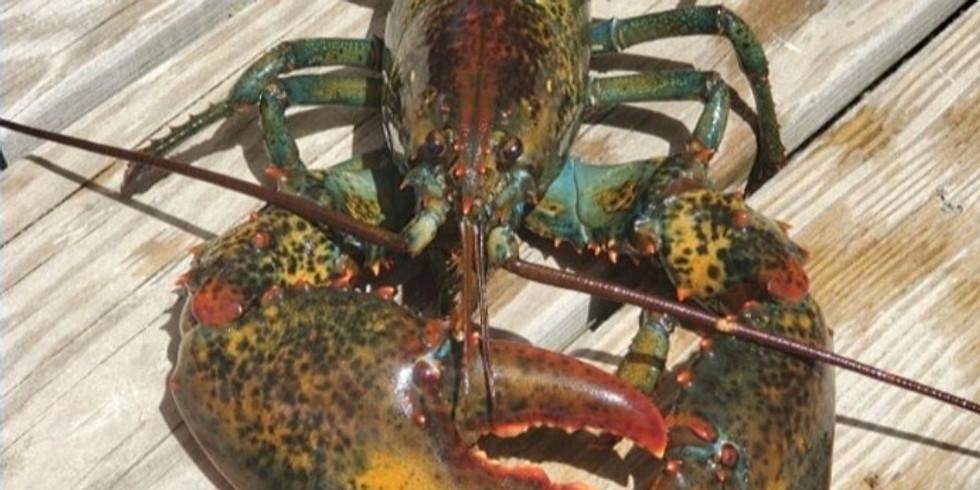 Creature of the Week: Lobster