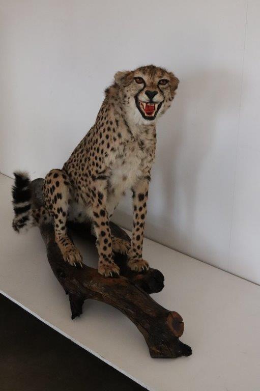 Cheetah FM  2018   (4)