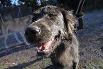 Dog boarding in Powell River