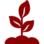 growing-plant (6).png