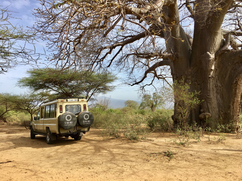 IMG_3761Sirini Safaris Tanzania.jpg