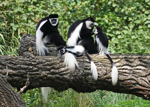 Sirini Safaris Uganda Gorilla Tracking