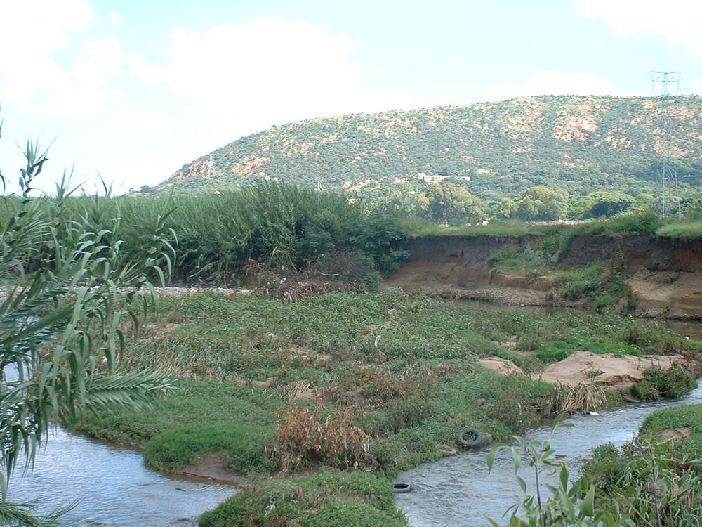 Apies river banks and reeds