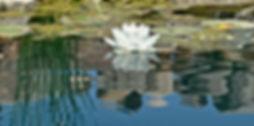 For New Website pic 10.jpg