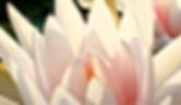 Screen Shot 2020-07-04 at 6.36.18 PM.png