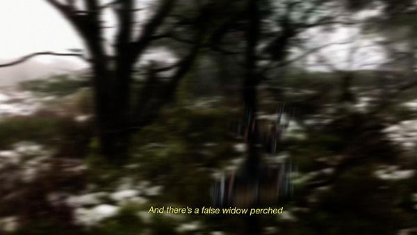 false widow.jpg
