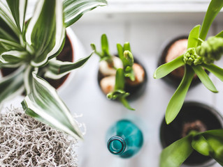 植物の力を借りる・グリーンを育てよう