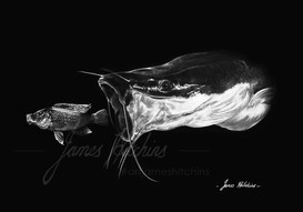 Sharptooth Catfish and Zambezi Happy