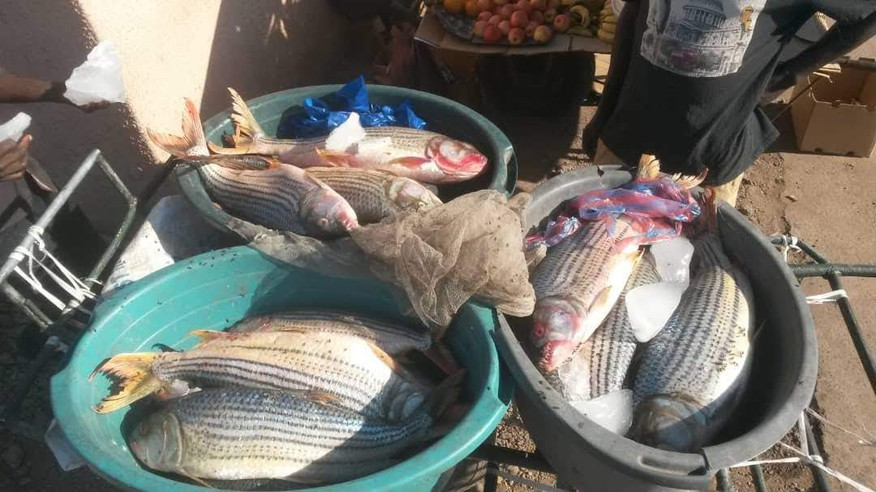 Tigerfish in livingstone Market