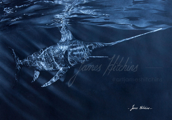 """Reflections"" - Swordfish"