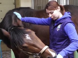 """9 июля вебинар """"Неврологическое здоровье лошади: как определить неврологические проблемы?"""""""