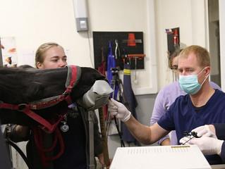 5 января Михаил Сучков проведет вебинар по эндоскопии