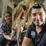 Бригада мобильного конного госпиталя MAXIMA VET летит в Новосибирск!