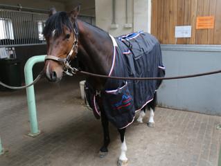 Новогодняя Релакс-программа для лошадей