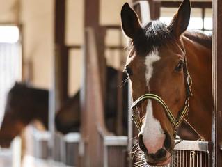 Коллективное страхование лошадей с MAXIMA VET
