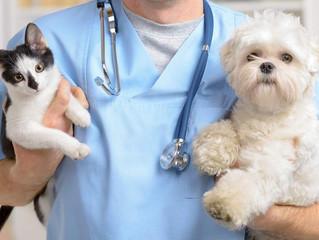 Открыта вакансия заведующего отделением мелких домашних животных