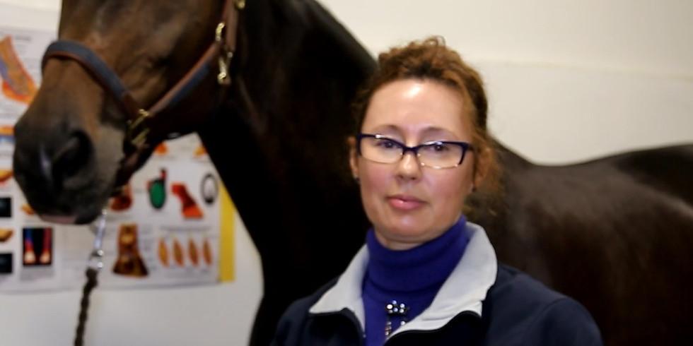 ИГП: Ультразвуковое исследование суставов грудной и тазовой конечностей лошади. 3 ступень.