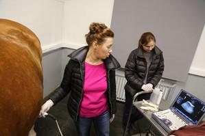 26-27 января: Ультрасонографическое исследование грудной и брюшной полости лошади. Вторая ступень