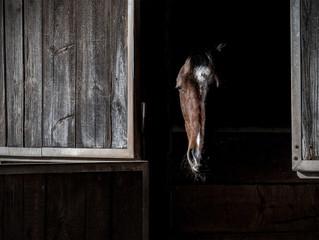 Статья: Почему моя лошадь бьёт в стену задними ногами? Что делать?!