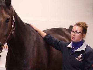 Серия вебинаров по предпродажному осмотру лошадей с 19 сентября