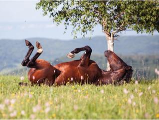 Вынужденная самоизоляция – не повод для паники, а повод заняться здоровьем вашей лошади!