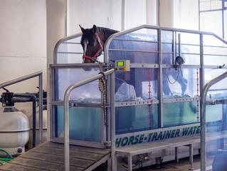 Реабилитационный центр для лошадей на базе клиники MAXIMA VET предлагает услуги акватренажера