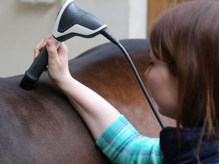 """Вебинар: """" Секрет гармоничной лошади. Методы аппаратной физиотерапии"""""""