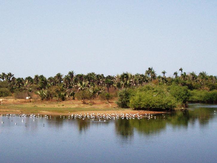 bolong-fenyo-community-wildlife-reserve-