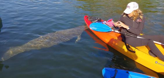 manatee paddle