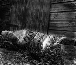 B&W cat_0842