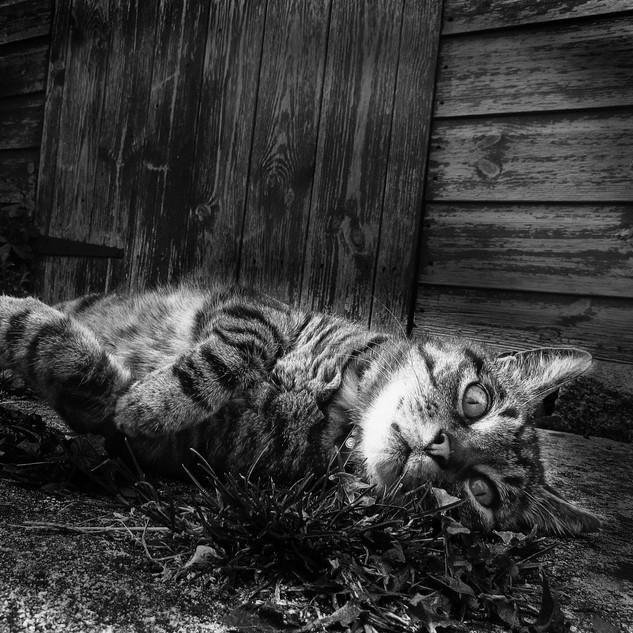 B&W cat_0842.jpg