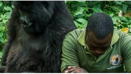 Twelve rangers get killed in Virunga National Park