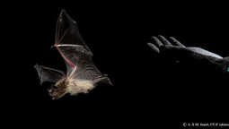 Support our colleagues of PTOP Salamandra! They have a home based bat hospital and need help!