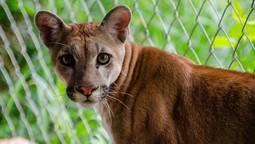 Want to Help? Adopt wild animals!