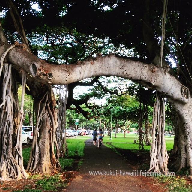 http://www.kukui-hawaiilifejournal.com/