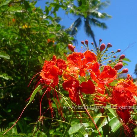 メレ・メイのイベントスケジュール発表!ハワイの春は、音楽の季節