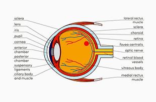 Die Augen sind unser wichtigstes Sinnesorgan. Aus diesem Grund ist optimales Sehen von großer Bedeutung.