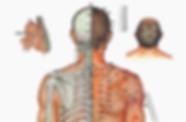 Von der TCM-Theorie geleitet, basiert Akupunktur auf der Lehre über Meridiane und Akupunkturpunkte. Mittels Nadeln, Moxa und anderer Methode werden Akupunkturpunkte stimuliert.