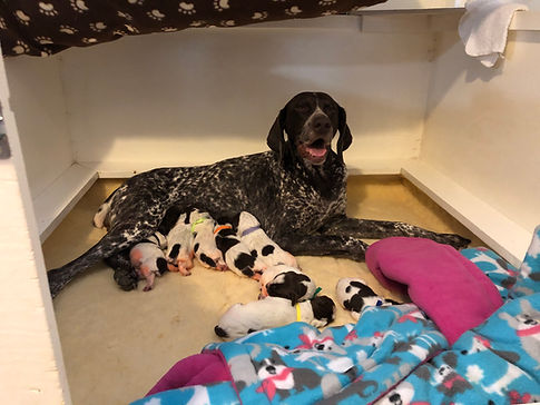 Annabelle and 8 puppies.jpg