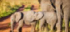 voyage photos en Afrique du sud safari photo