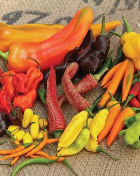 chillies-main-shot.jpg